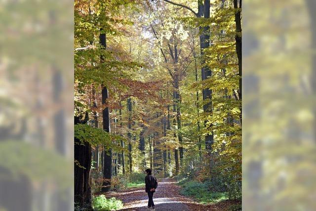 Forst will weniger Bäume fällen