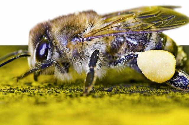 Kein Schutz für Honig