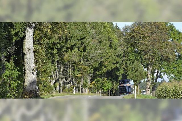 Straßenmeisterei lehnt Pflegemaßnahmen künftig ab