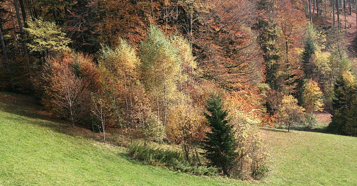 Mitten auf der Wiese wachsen Bäume und...her: Auch dort war einst eine Schanze.    Foto: Marlies Jung-Knoblich