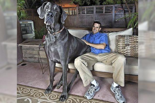 Der größte Hund der Welt ist tot