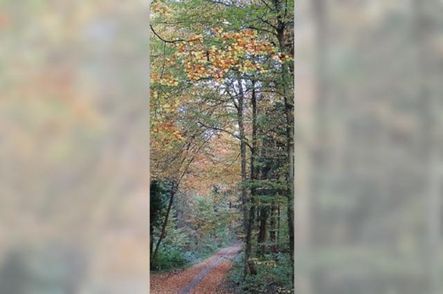 Wieder Holzernte im Stadtwald