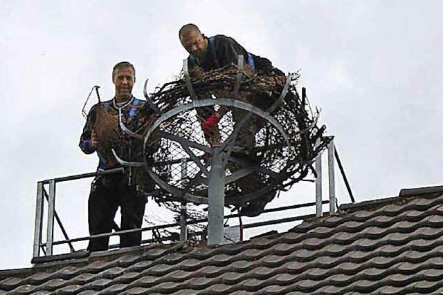 Neues Nest mit neuem Beobachtungsposten