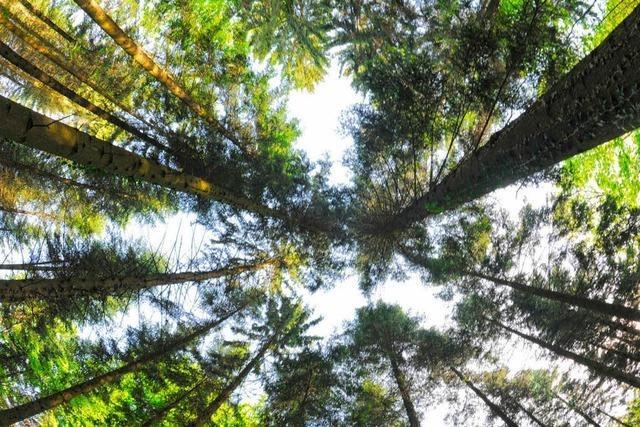 In deutschen Wäldern wird das Holz knapp