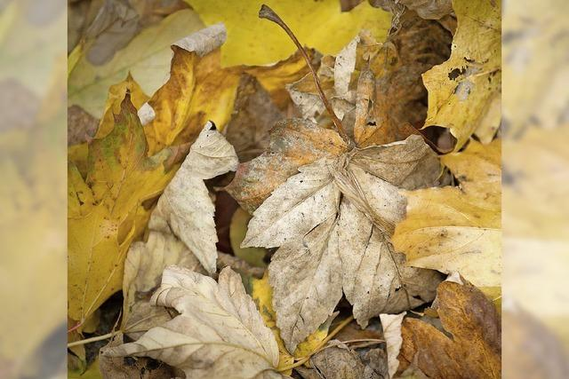 DIENSTAG: KLASSIK: Herbstgedanken