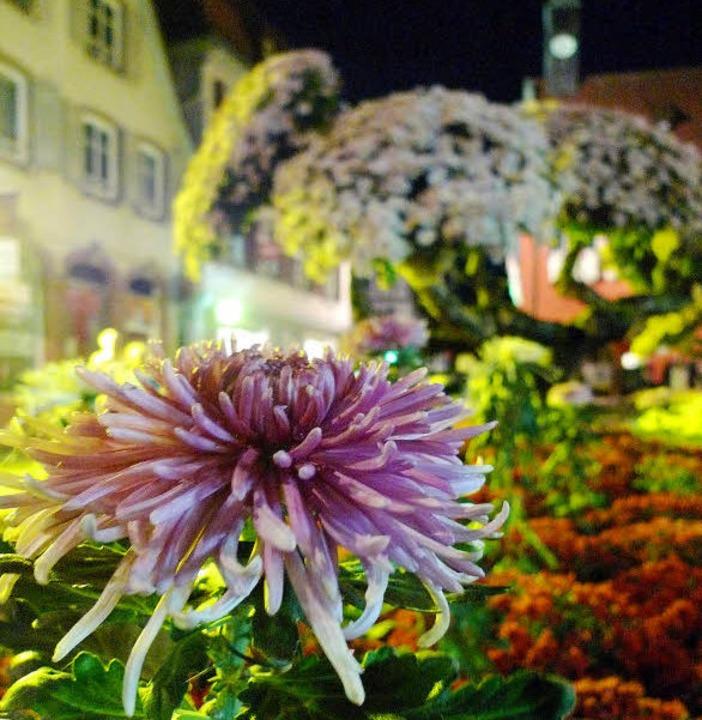Eine Blume lässt Mädchenträume wahr werden.   | Foto: wolfgang künstle