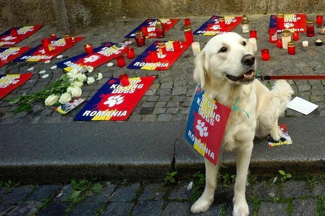 Rumänien: Tierschützer warnen vor Massakern an Hunden