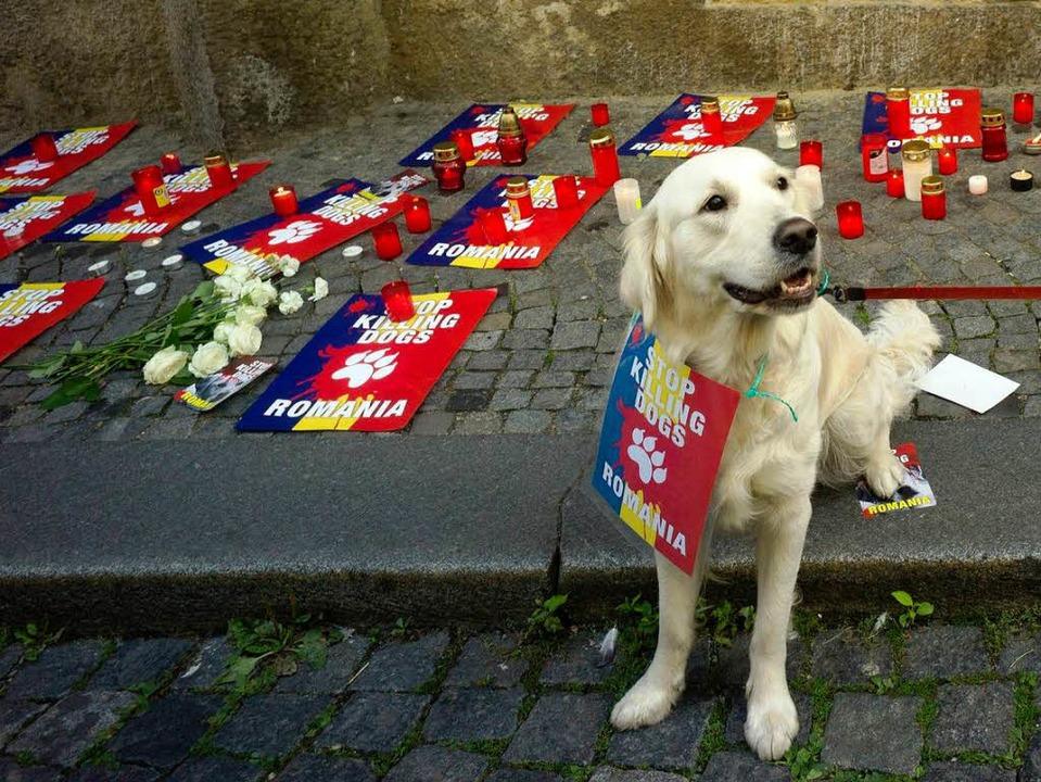 Auch er geht gegen Hundetötungen auf d...or der rumänischen Botschaft in Prag.   | Foto: AFP