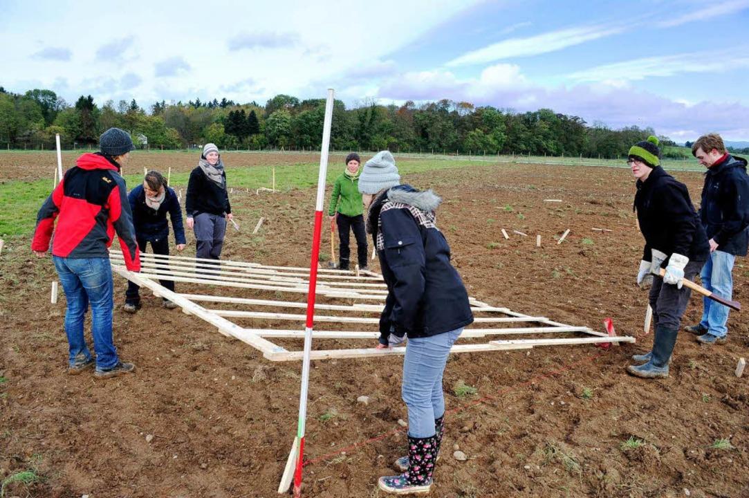 Die Studierenden pflanzen die Bäume exakt nach dem vorgegebenen Raster.    Foto: Thomas Kunz
