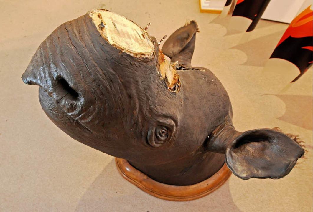 Der Diebstahl des Horns von einem Nash... hat jetzt zu der Ausstellung geführt.    Foto: dapd