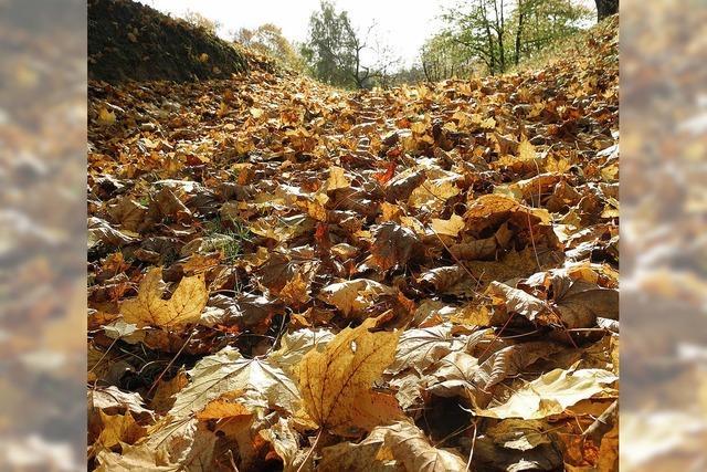 Ein Mal Herbst zum Mitnehmen, bitte!