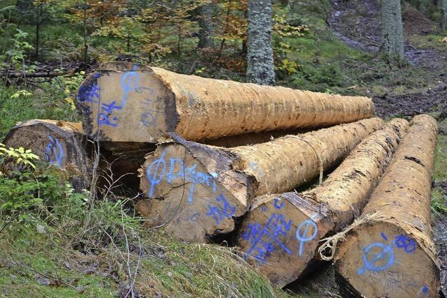 156 000 Euro Gewinn aus dem Wald