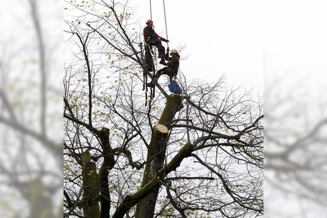 Im Einsatz für einen prächtigen Baum