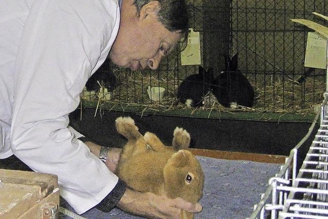 Die Kaninchen punkten