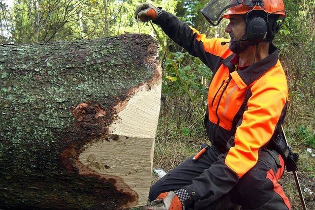 Warum verunglücken im Südwesten so viele Waldarbeiter?