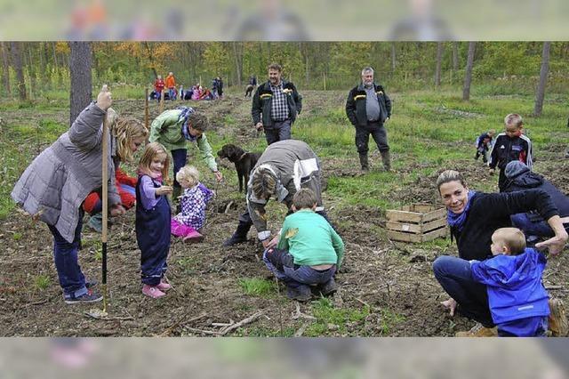 1000 Eichen für den Breisacher Stadtwald
