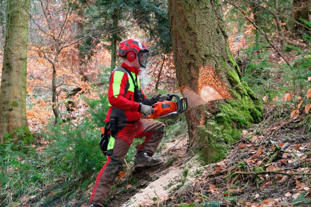 So dickes Stammholz wird es in Ballrec...vergangegen Jahren dem Wald entnommen.    Foto: Sabine Model