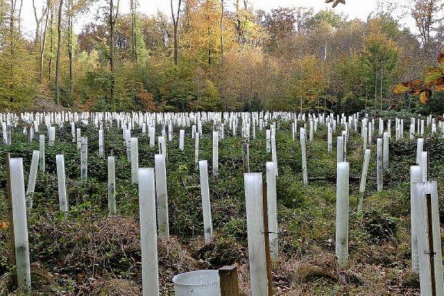 Atempause für den Stadtwald