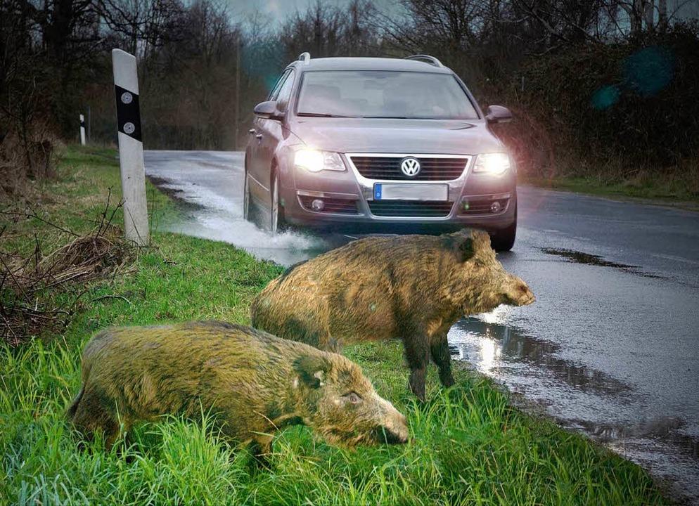 Achtung, Wildsau!  | Foto: VW/hp