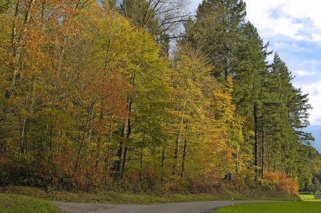 Freiämter Wald erwirtschaftet einen Gewinn von 20000 Euro