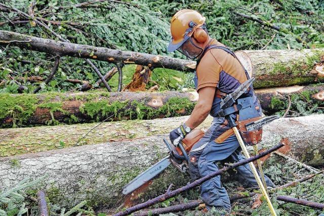 Gutes Jahr für den Wald