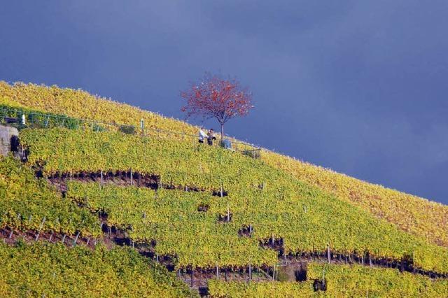 Durbach im Herbst