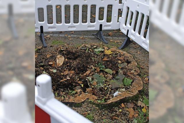 97 Bäume müssen im Stadtgebiet fallen