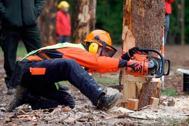 Holz als ökologisches Kapitalanlageobjekt