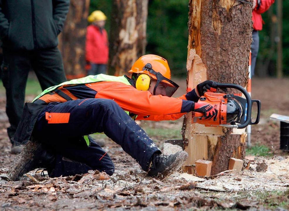 Können und Umsicht sind gefragt: Waldarbeiter beim Baumfällen.  | Foto: dpa