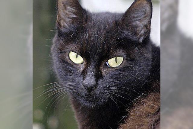 Scheue Katze Motischa