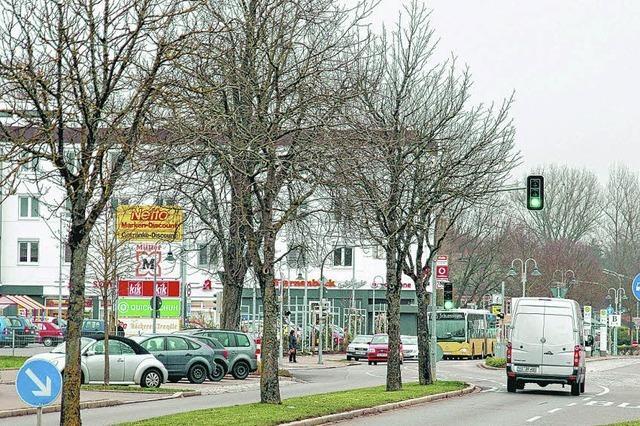 Baumsterben in Donaueschingens Innenstadt