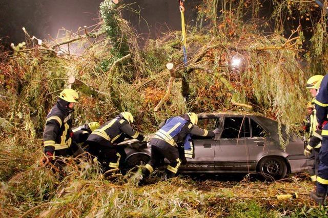 Trauerweide stürzt um und begräbt jungen Autofahrer
