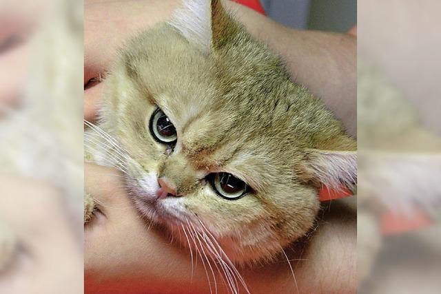 Bad Säckinger Katzen in der Regel kastriert
