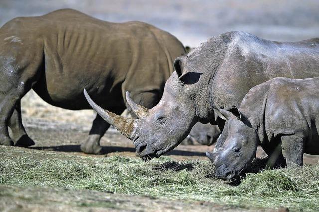 Sind die Nashörner noch zu retten?