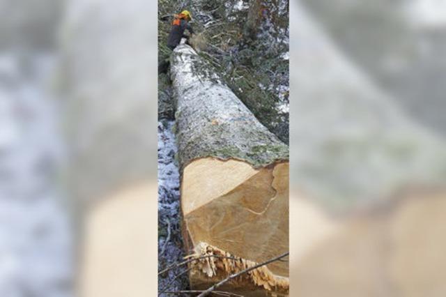 Forst bringt satten Gewinn