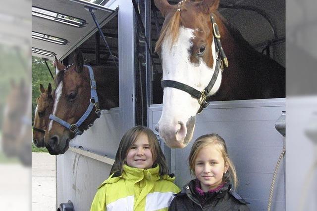 Kühe, Kälber, Collies und Pferde