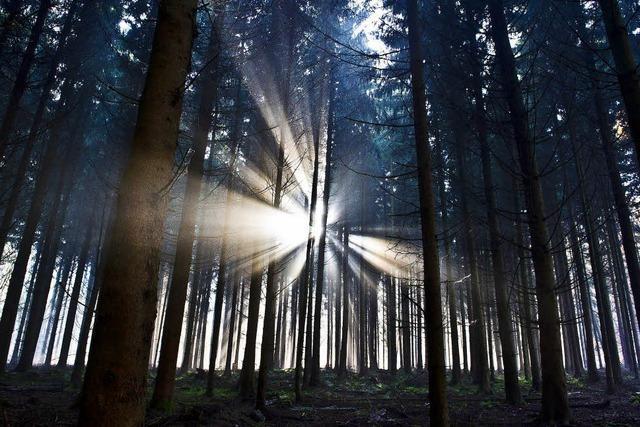 Wald geht es immer besser