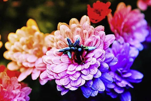 Melissa Kretschmer macht das schönste Foto