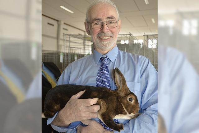 Preisgekrönte Kaninchen