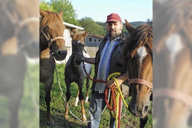 Im Land der Pferde