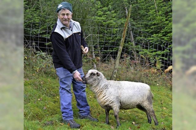 Schaf statt Pestizide