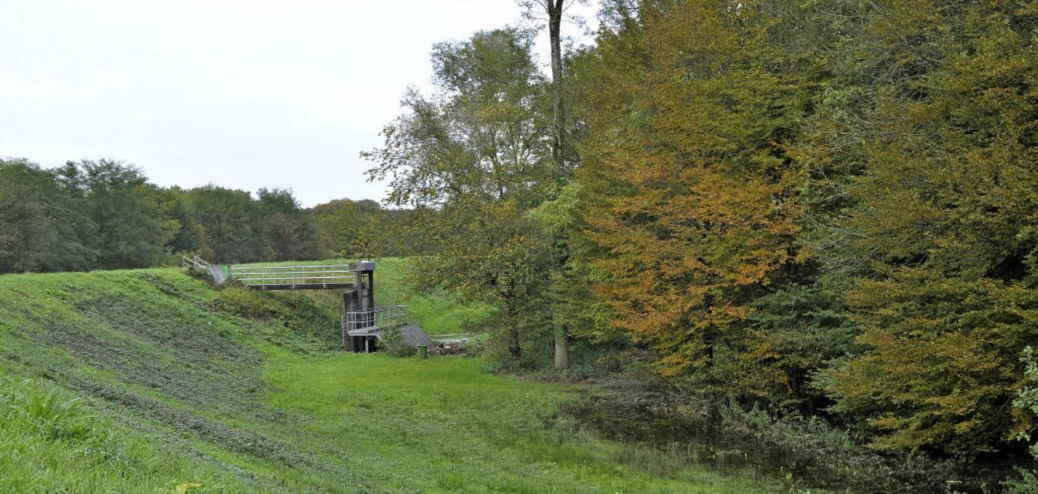 Umkirch und Gottenheim müssen das Rück...d den Bedarf an Waldflächen betrifft.   | Foto: julius steckmeister