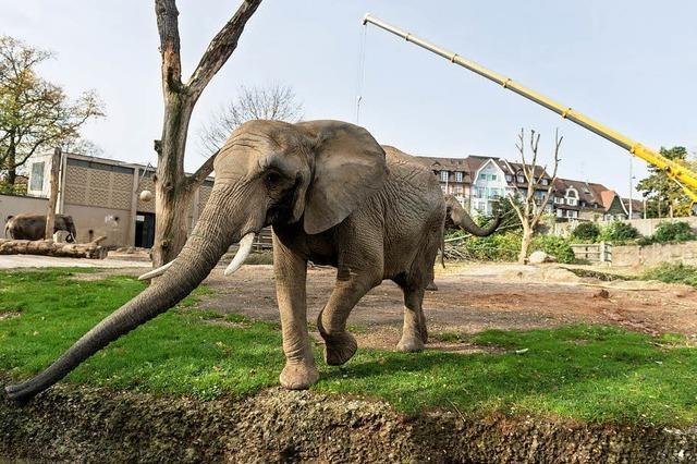 Ende 2016 mehr Platz für die Elefanten