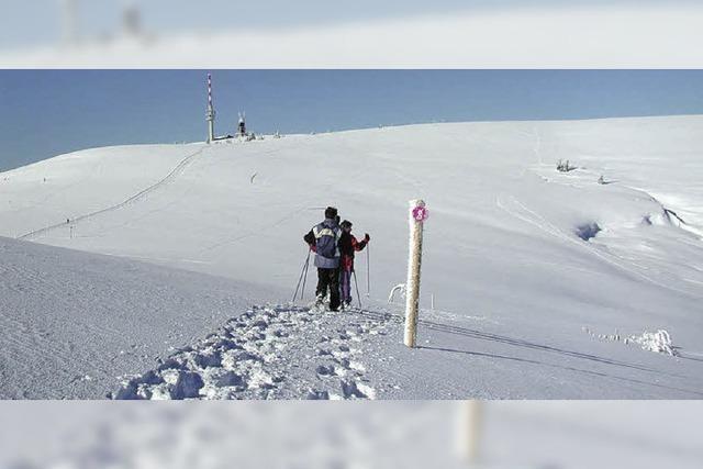 Stille Genießer allein im Schnee