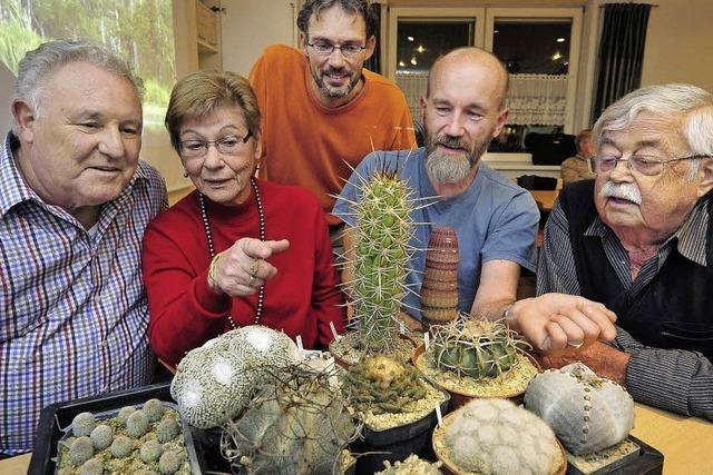 Mehr als ein kleiner, grüner Kaktus