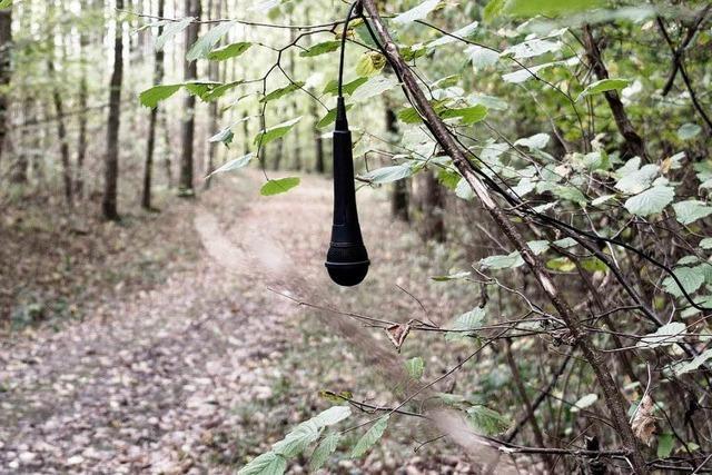Künstler verwanzt den Schwarzwald und wird angezeigt