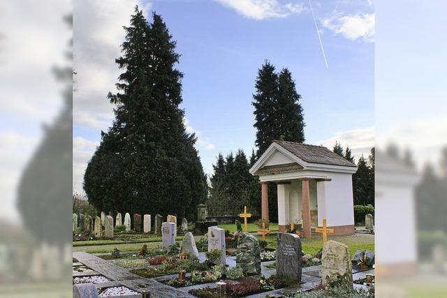 Zedern auf dem Huttinger Friedhof werden gefällt