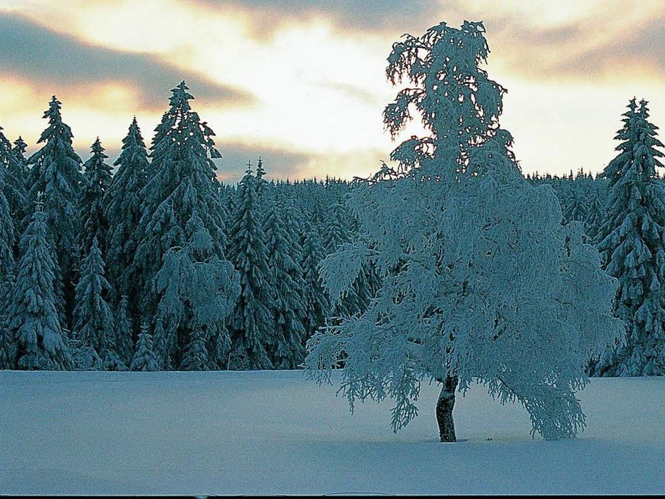 Der Schwarzwald ist auch im Winter ein...srael und den arabischen Golfstaaten.   | Foto: naturschutzzentrum ruhestein