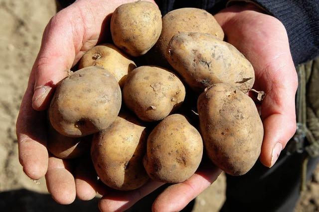 Die Genkartoffel Amflora war illegal