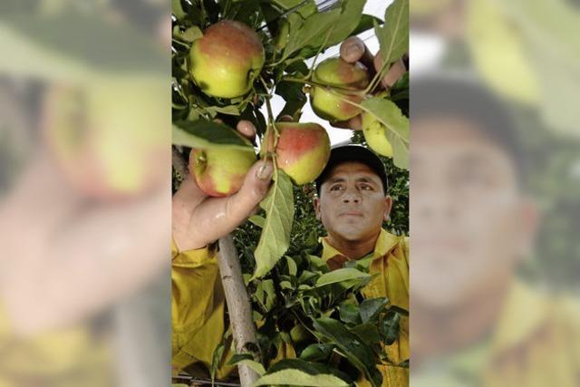 Sorge bei Winzern und Obstbauern